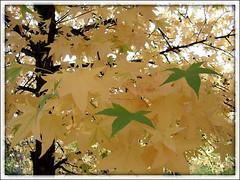 Boje jeseni 4