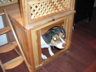 Beagle Dog House Dimensions