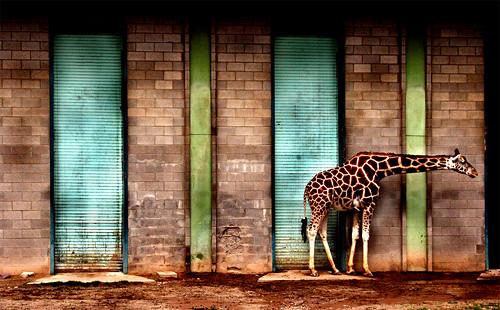 fotografi di kebun binatang