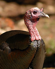 Turkey in Profile | by DanielJames