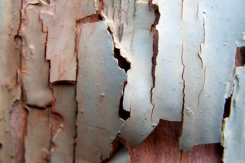 Peeling Paint | by Auntie P