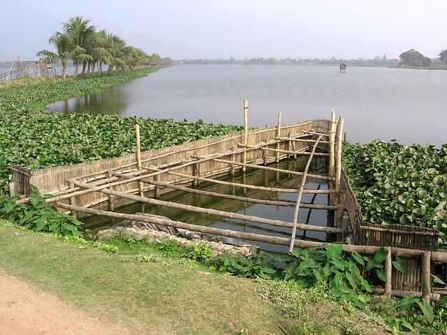 मछली पालन के लिये प्रसिद्ध कोलकाता झील स्थानीय स्तर पर भेरी के नाम से जाना जाता है