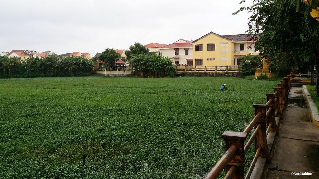 Matkalla hotellilta Hoi Anin keskustaan oli peltoa