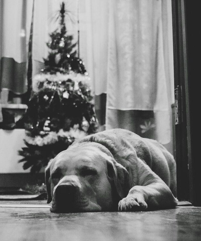 Деда Мороза ждет
