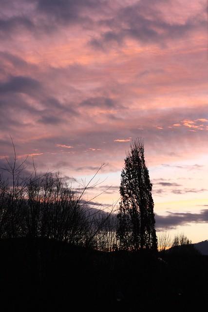 Pink morning I