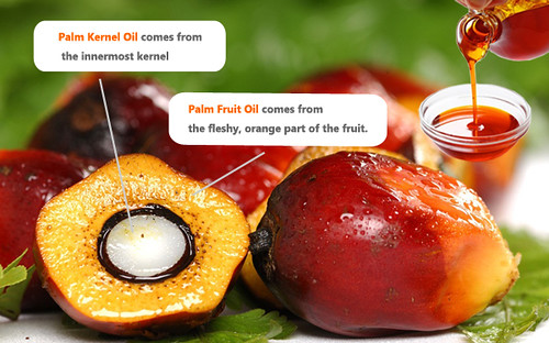 palm-kernel-oil-facts