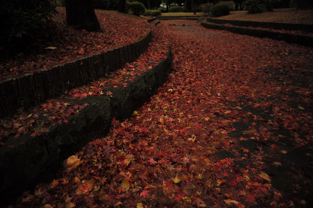 Carpet of fallen leaves