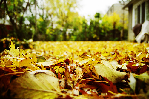 Fall is here, time for some maturity! | by Amin Allen Tabrizi