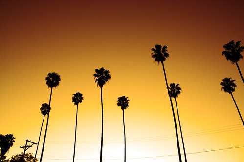 Sunburst Palms | by Steve Zaslavsky