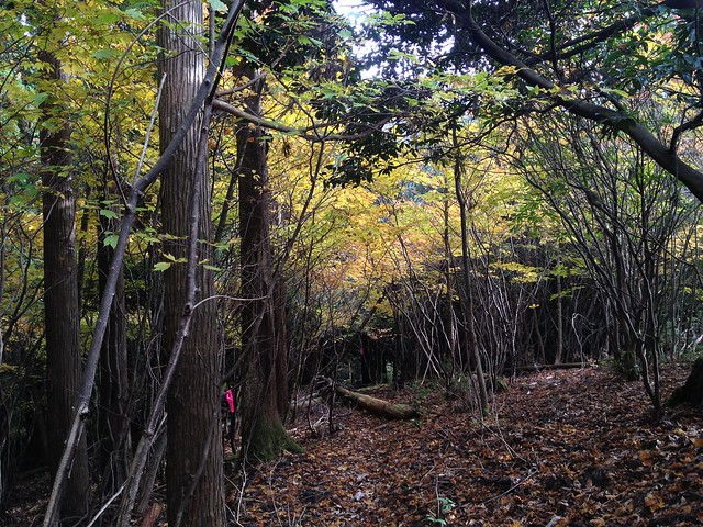 天狗堂 岩尾谷登山道 紅葉のトンネル