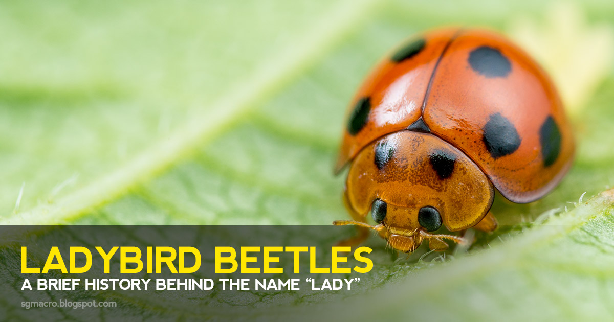 "Ladybird Beetles: A Brief History Behind the Name ""Lady"""