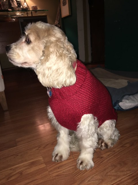 Sophie in her sweater