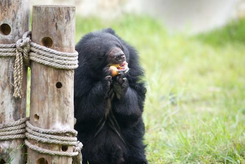 Caz enjoys an apple
