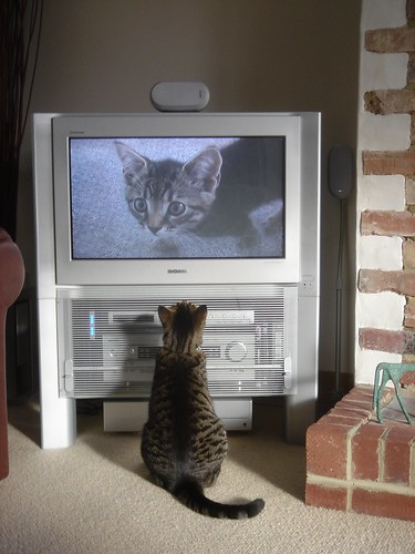 Fatty watching himself on TV | by cloudzilla