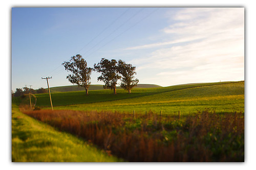 3 Trees and Powerline | by *phototristan