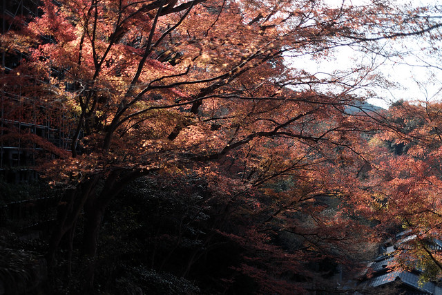 Autumn at the trace2@Kiyomizu, Kyoto