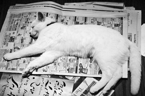 newspaper_cat_6616 | by doviende