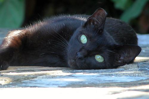 Black White Tom Cat