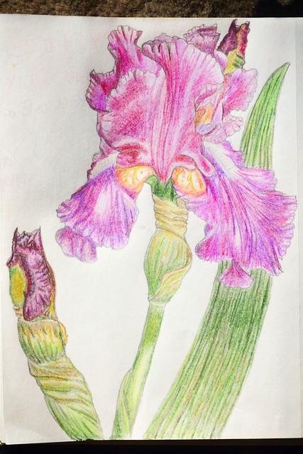 Iris Tutorial