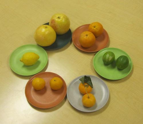 lemon, grapefruit, orange, lime, mandarin, clementine