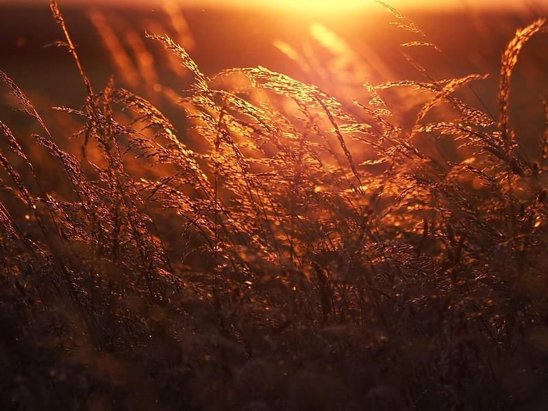 Light meadows