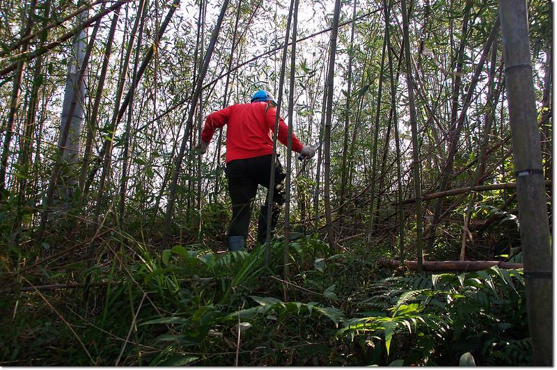 二層坪山竹林