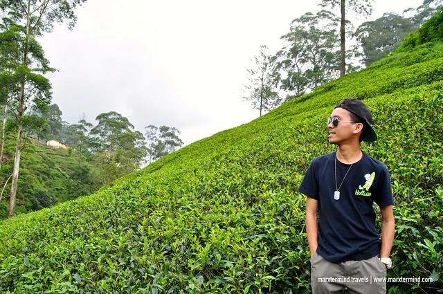 Tea Plantations on Our Way to Nuwara Eliya