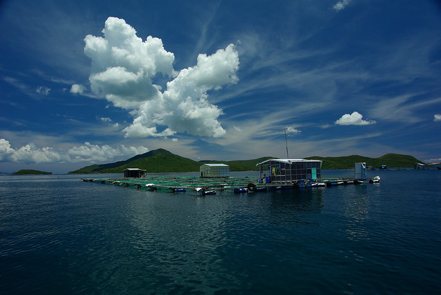 Aquaculture cages, Van Phong Bay, central Vietnam. Photo by David Mills.