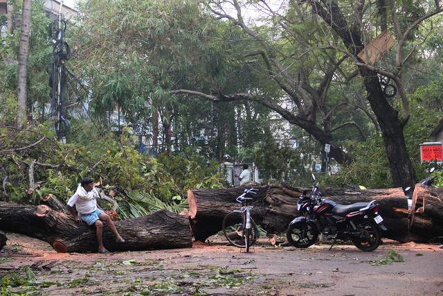 A mammoth tree lays strewn across the road in Gandhi Nagar. While countless trees were uprooted all across the city, many of Chennai's canopied upscale avenues were among the worst hit. Going by unofficial counts, the city is estimated to have lost somewhere around 12,000 trees.