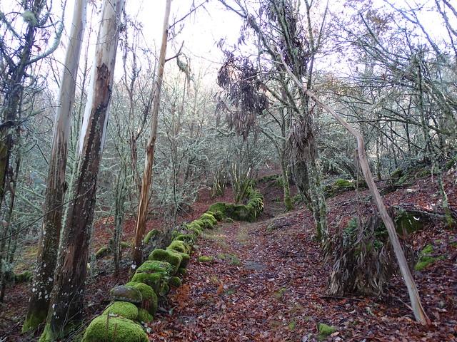 Camino PR-G 178 Ruta de Maquino Largaño