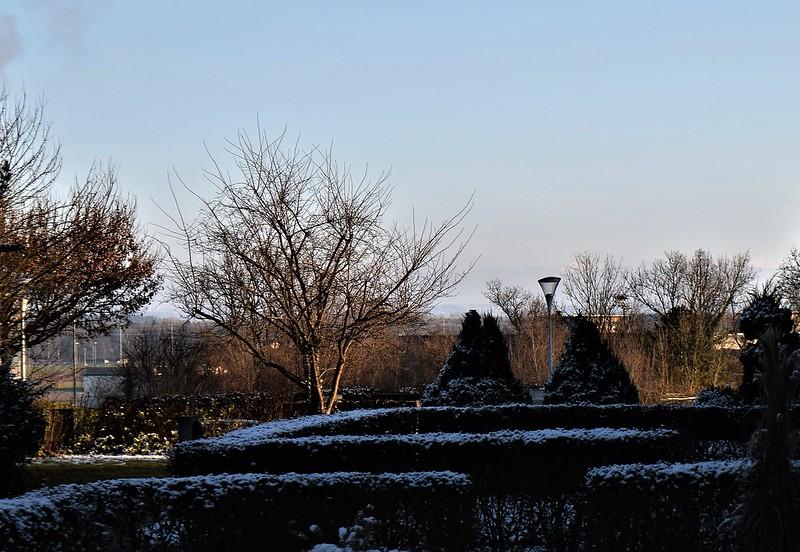 Snow in Front Garden 03.01 (1)
