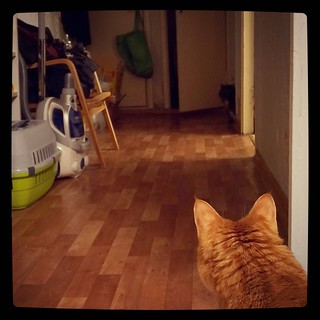 Standoff, for #365days project, 360/365