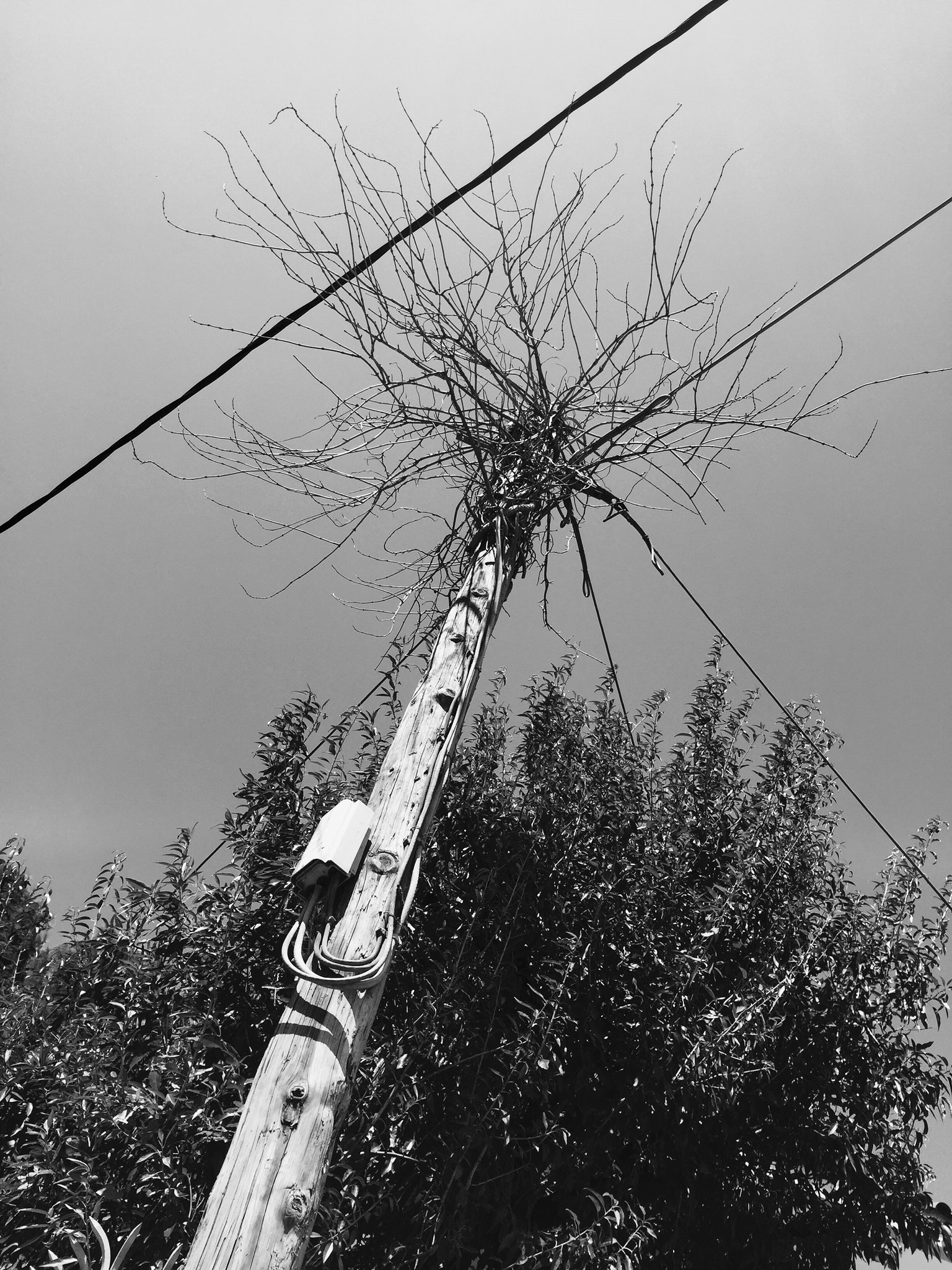 Cables to Branches