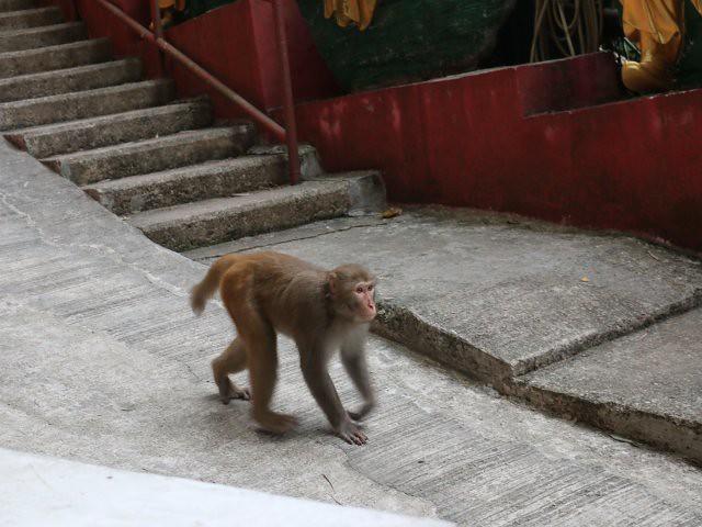 manastirea celor 10000 de budda obiective turistice gratuite hong kong 2