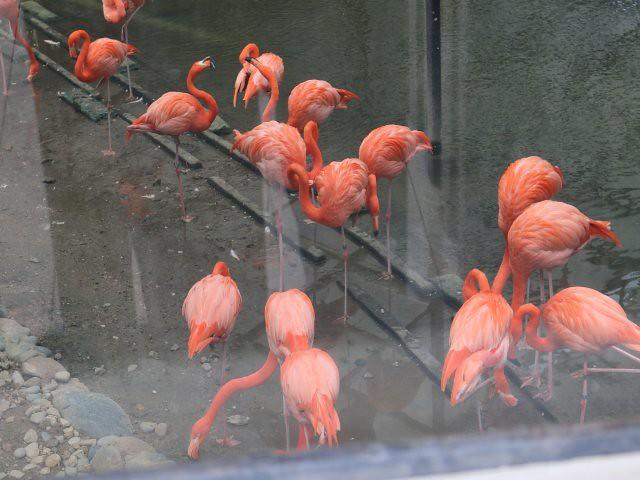 gradina zoologica si botanica obiective turistice gratuite Hong Kong 4