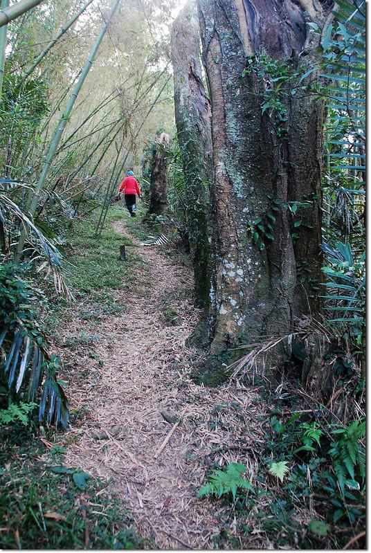 枕頭山步道 3