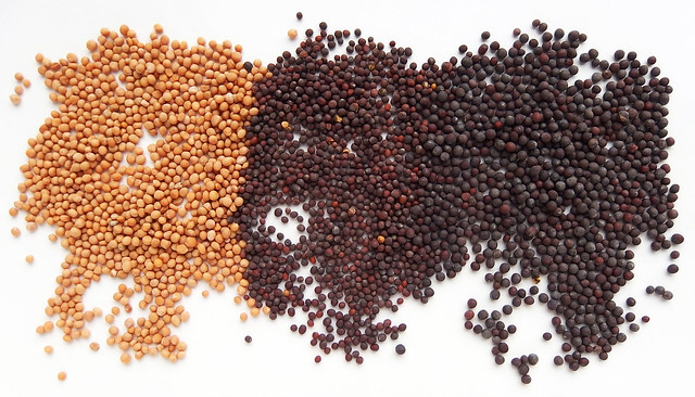 Yellow, Brown and Black Mustard seeds