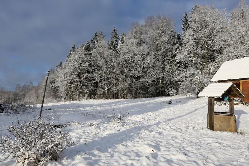 Pirmais sniegs un saule