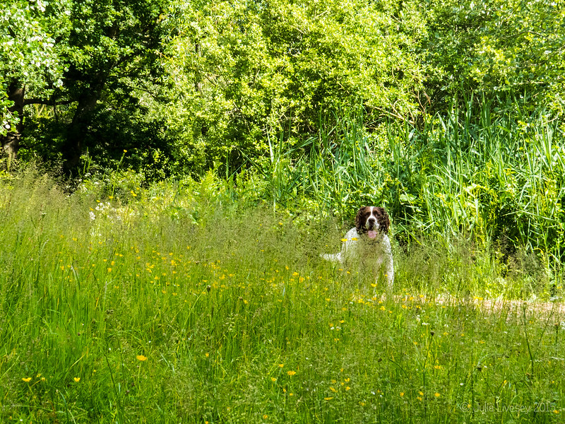 Max through the long grass