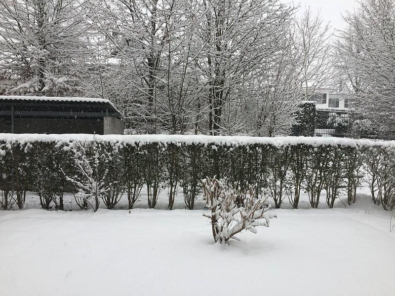 Front gatden snow