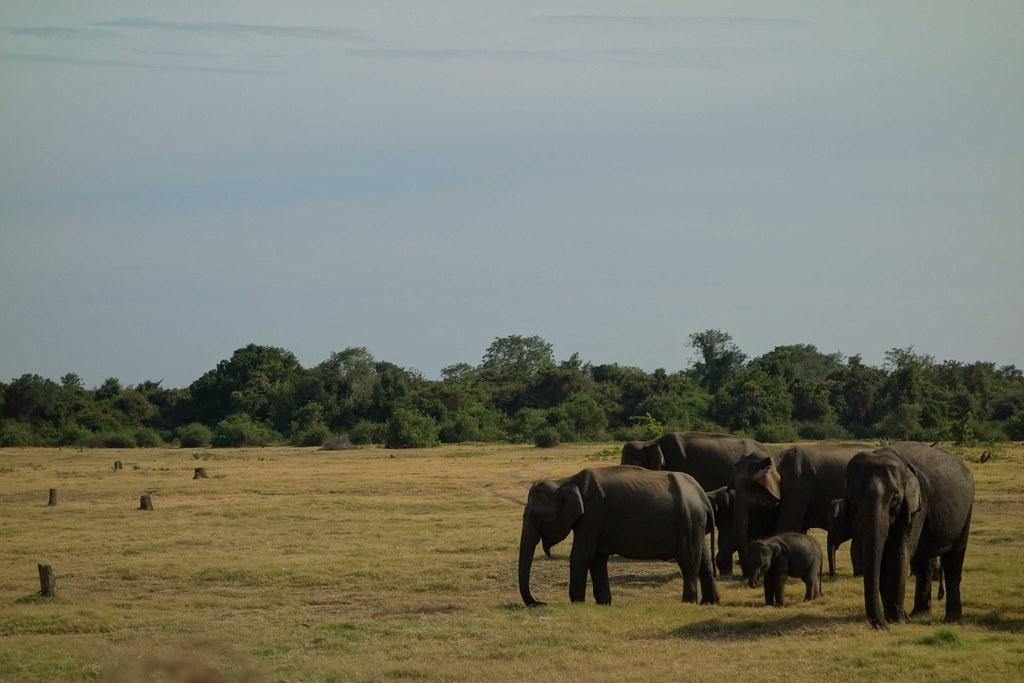 Sri Lanka - Sigiriya, Kaudulla, Polonnaruwa, Trincomalee