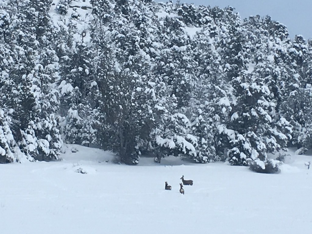 Lucky deers.. lots of freedom, lots of snow.. exactly what I want.