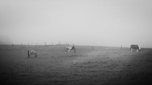 Pastoral Landscape #1