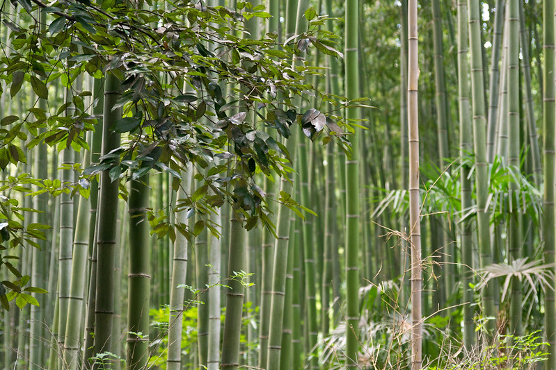 Arashiyama Bamboo Grove, Kyoto, Japan | packmeto.com