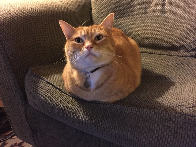 I'm a kitty loaf right?