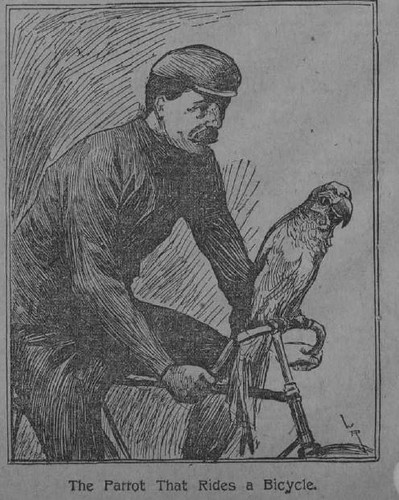 The Parrot that Rides a Bicycle