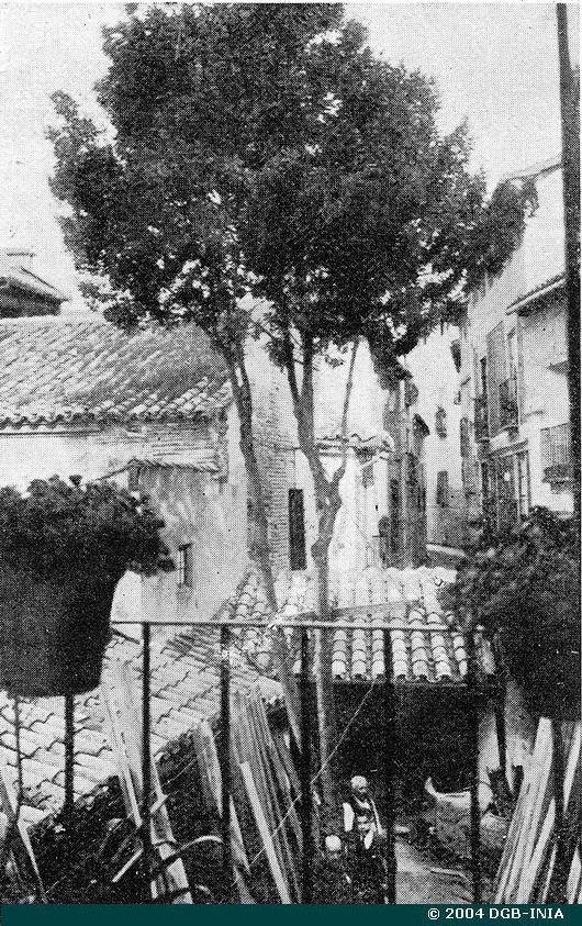 Laurel de la calle San Ildefonso plantado por Bécquer fotografiado a principios del siglo XX. Archivo del INIA