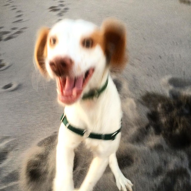 Excited pup