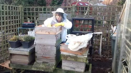hive check Jan 17 2