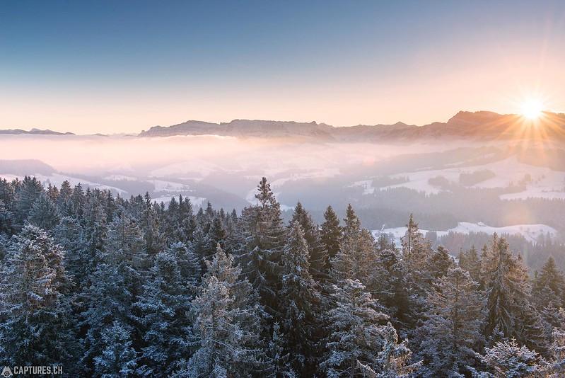 First light over the trees - Chuderhüsi
